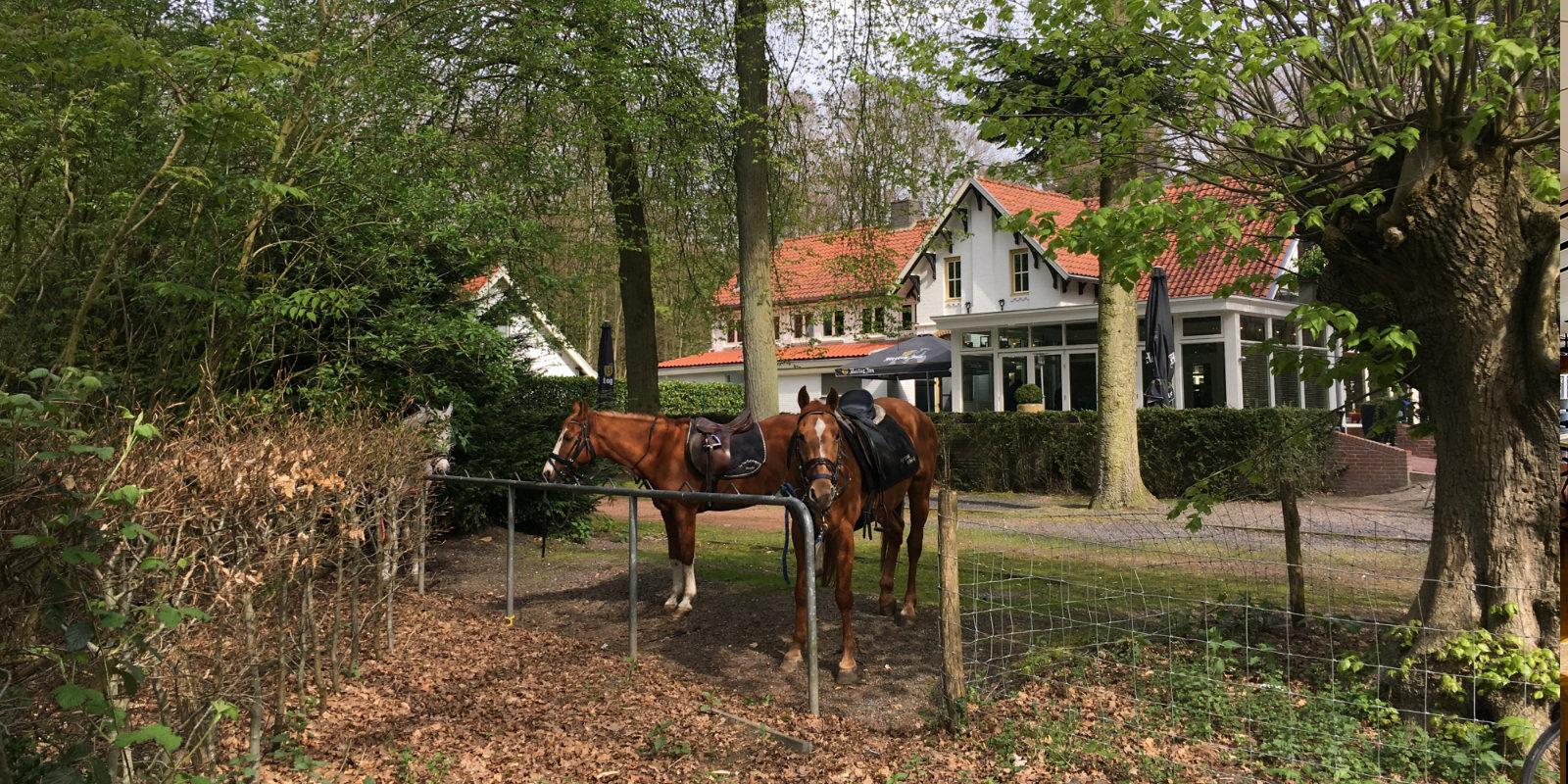 Paardrijden bos Breda